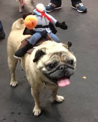 boxer puppy halloween costumes what a pug halloween party looks like pug costumes barkpost