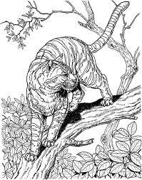 imagen relacionada mis printable tigers owl cat