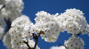 spring flowers backgrounds hd pixelstalk net