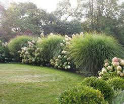 Tall Grass Landscaping by Landscaping With Ornamental Grasses The Happy Housie