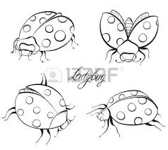 hand drawn icons ladybird royalty free cliparts vectors