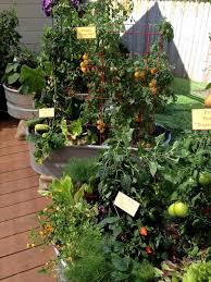Vegetable Gardening In Pots by 462 Best Vegetables And Fruits In Containers And Patio Pots Images