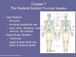 Axial Shoulder Anatomy The Skeletal System The Axial Skeleton Lecture Outline Ppt Download