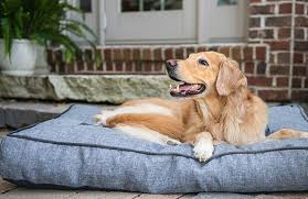 Comfort Retrievers The Best Dog Beds For Your Pup In 5 Easy Steps