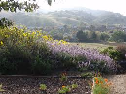 calif native plants creating a drought resilient garden with california natives bay