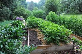 what to plant now for a fall vegetable garden a way to garden