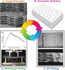 cycle shell stronger 3d printing revealed by biomimetic design for additive