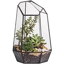 amazon com glass hinged roof terrarium succulent u0026 air plant