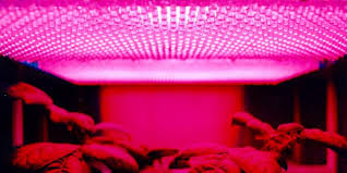 top led grow lights best led grow lights reviews 2018 top rated lights for the money