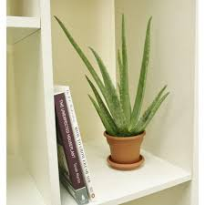 air purifying indoor plants with names bedroom inspired indoor
