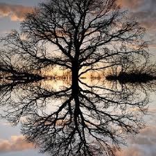 286 best mirror image reflection images on fashion