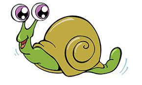 snail facts information