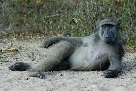 Sexy Monkey Meme - sexy monkey pose blank template imgflip
