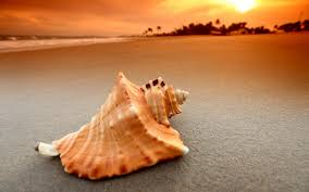 41 shell wallpapers hd creative shell pictures full hd wallpapers