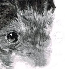 how to draw and render realistic fur with pencils and charcoal
