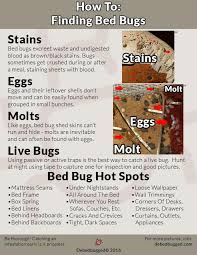 can you see bed bugs with a black light bed bug symptoms find proof get debedbugged