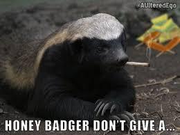 Honeybadger Meme - stoffel the honey badger home facebook