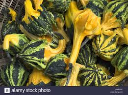 ornamental gourds for sale outside health shop uk