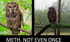 Funny Owl Meme - really funny memes meth not even once