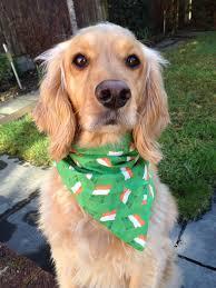 irish flags dog bandana st patricks day dog bandanas