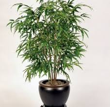 best air purifying indoor plants the bamboo palm is a cheap