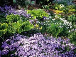 246 best flowers for my garden images on pinterest garden