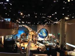 perot science dinosaur picture of perot museum of nature and