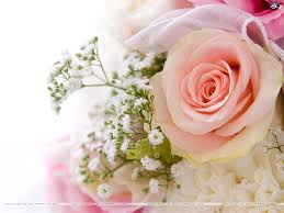 Pink Roses Wallpaper by Roses Wallpaper 5