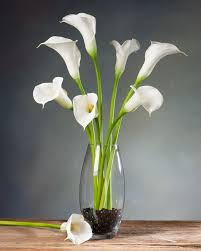 cala lilies large calla silk flower stems for casual decorating at petals