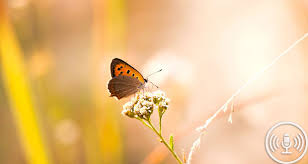 for a approach to dementia care explore the butterfly effect