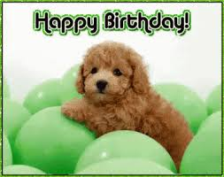 Happy Birthday Meme Dog - happy birthday dog gif 5 gif images download