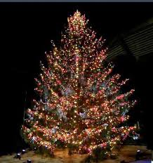 large christmas trees for sale u0026 wholesale christmas trees newland