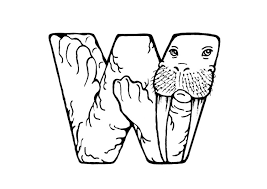 coloring page for walrus coloring page w walrus img 24811