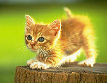 kittens baby cats assorted small cute kitten based