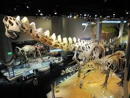 dinosaur fossils picture of perot museum of nature and science