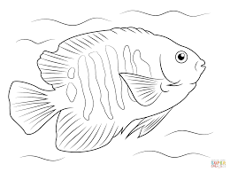 print angel fish coloring design animal coloring
