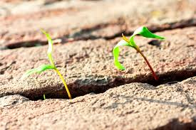 accidental herbicide injury u2013 fixing herbicide spray drift on plants