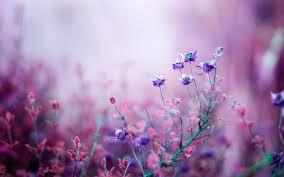 wallpapers of flowers qygjxz