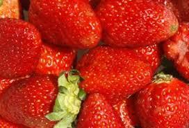 fruit fresh silk keeps fruit fresh without refrigeration tufts now