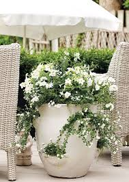 Shrubs For Patio Pots 25 Trending Strawberry Pots Ideas On Pinterest Bend Or News