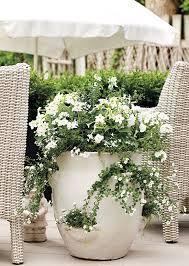 Flowering Patio Plants 1134 Best Planter Urn Arrangements Images On Pinterest Pots