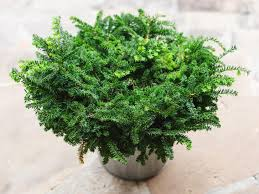 outdoors plants regarding motivate skillzmatic com skillzmatic com