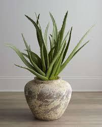 aloe vera houseplants in concrete pot easy to grow aloe vera