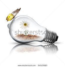 light bulb white flower inside butterfly stock photo 114184618