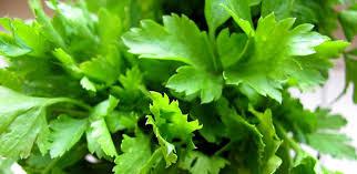 herbe cuisine 3 recettes bio très faciles avec du persil