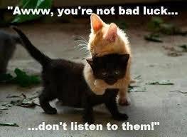 Cute Kittens Meme - cute black kitten memes girlsaskguys