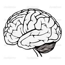 Drawn Brains Coloring Page Pencil And In Color Drawn Brains Brain Coloring Page