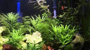 my tropical home aquarium youtube