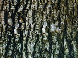 tree bark camouflage hydrographics filminfected home