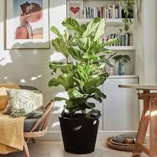 plants indoors buy indoor house plants online patch